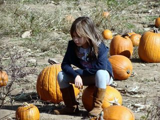 contemplating pumpkins