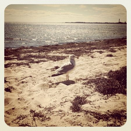 TheSeagull