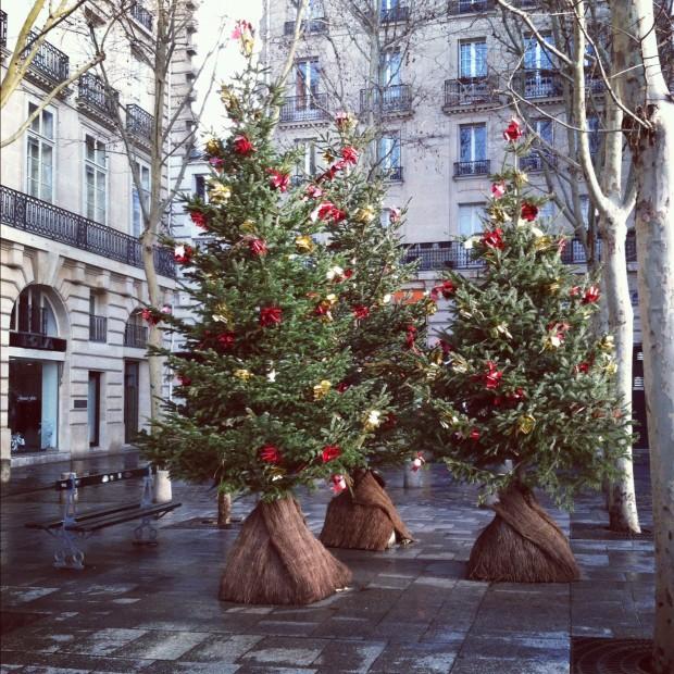 Saint Suplice Christmas Trees