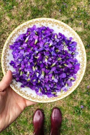 Violet Syrup 03