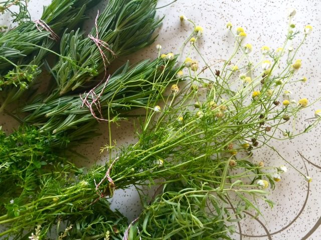 How to Dry Fresh Herbs | In Jennie's Kitchen