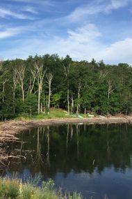 Ashokan Reservoir July 2017 | In Jennie's Kitchen
