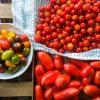 Favorite Tomato Recipes | In Jennie's Kitchen